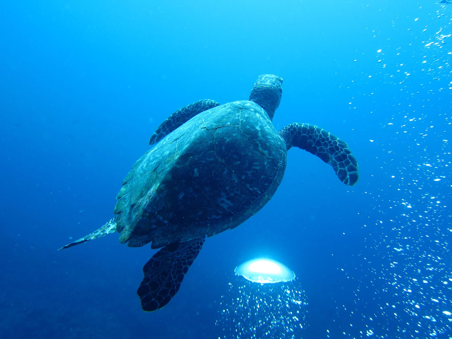 Scuba Diving Paradise